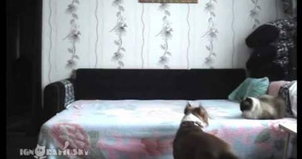 Este perro fue capturado con una cámara oculta. Lo que la cámara capturo te va hacer reir!