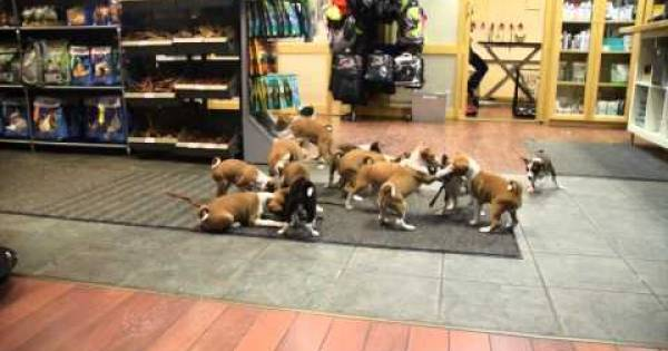 ¿Te imaginas cómo sería la vida con 16 cachorritos en casa?… ¡Te encantará verlo!